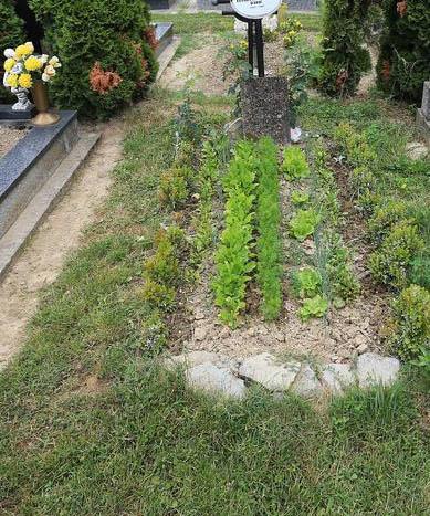 Grob vrt Hrvatska 1